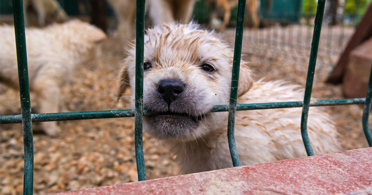dogs puppy mill